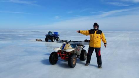 Polar Bear Crossing 2017 - 1